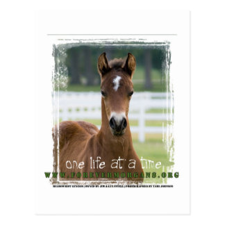 ForeverMorgans One Life at a Time Foal Postcard