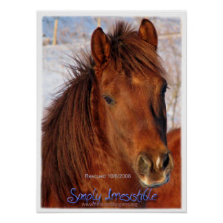 ForeverMorgans Simply Irresistible Horse Poster