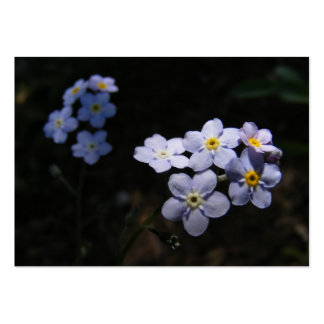 Forget Me Not ~ ATC Large Business Cards (Pack Of 100)