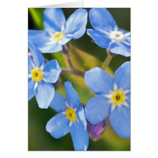 forget me not blossoms romantic thank you card
