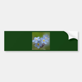 Forget Me Not Blue Myosotis Bumper Sticker