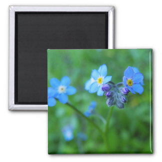 Forget-me-not Blues 2 Inch Square Magnet