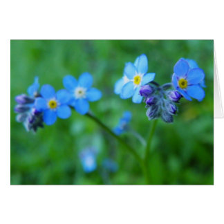 Forget-me-not Blues Card