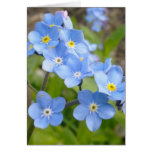 Forget Me Not Card