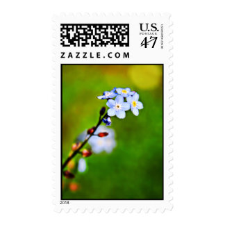 Forget Me Not flower Postage stamps