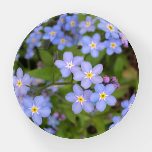 Forget-Me-Not Flower Round Paperweight