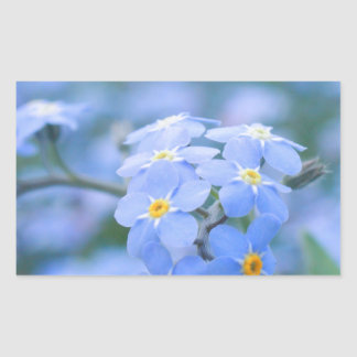 forget-me-not-flowers no. 2 photographed by Tutti Rectangular Sticker