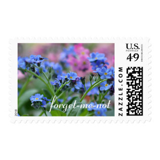 Forget-me-not flowers postage