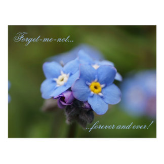 Forget-me-not forever and ever! postcard