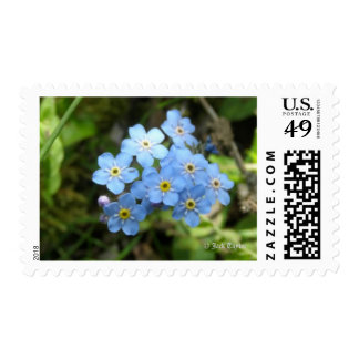 Forget-Me-Not Postage Stamps