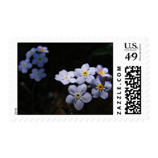 Forget Me Not ~ stamp