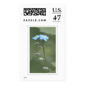 Forget-me-not stamps