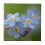 Forget Me Not Tiles