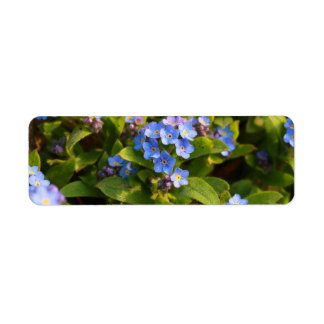 forget-me-not with dew label