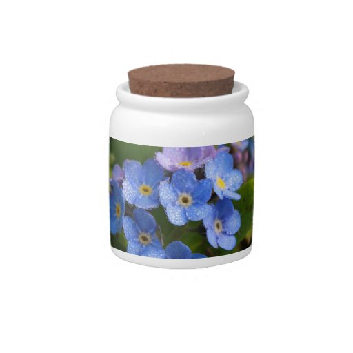 forget-me-not with dew macro candy jar