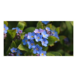 forget-me-not with dew macro card