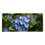 forget-me-not with dew macro rack card template
