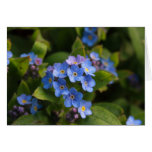 forget-me-not with dew macro stationery note card