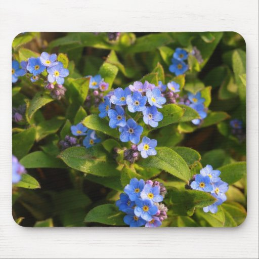 forget-me-not with dew mouse pad