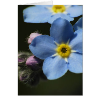 Forget-Me-Nots 1 Blank Greeting Card