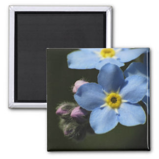 Forget-Me-Nots 1 Magnet