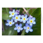 Forget Me Nots 2 Greeting Card