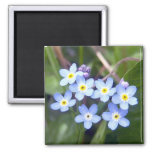 Forget Me Nots 2 Magnet