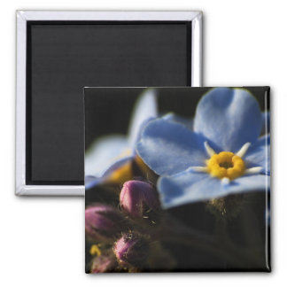 Forget-Me-Nots 2 Magnet
