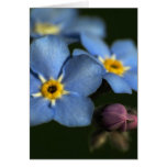 Forget-Me-Nots 3 Blank Greeting Card