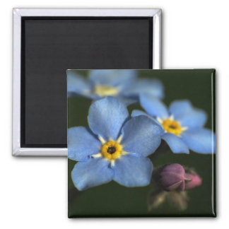 Forget-Me-Nots 3 Magnet
