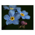 Forget-Me-Nots 3 Poster