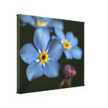 Forget-Me-Nots 3 Stretched Canvas Print