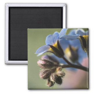 Forget-Me-Nots 4 Magnet