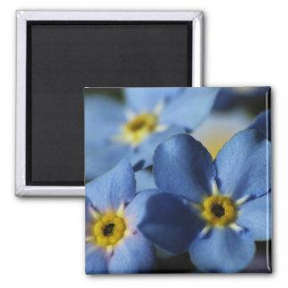 Forget-Me-Nots 7 Magnet
