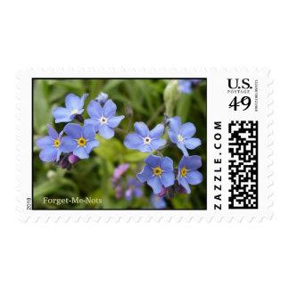 Forget-Me-Nots, Alaska State Flower Postage Stamps