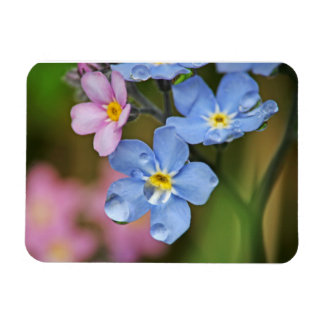 Forget-Me-Nots and Raindrops Macro Rectangular Photo Magnet