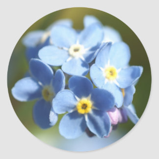 Forget Me Not's Cluster Classic Round Sticker