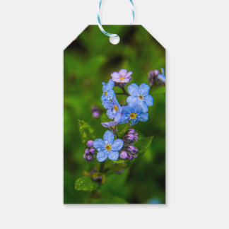 Forget-me-nots in the Rain Gift Tags