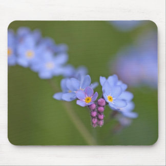 Forget Me Nots Mouse Pad