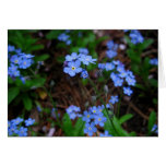 Forget-Me-Nots Notecard Greeting Card