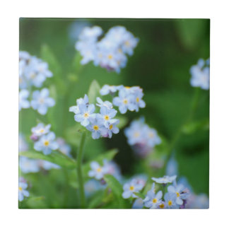 Forget Me Nots Small Square Tile