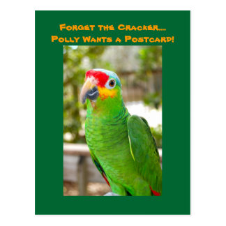Forget the Cracker, Polly Wants a Postcard, Parrot Postcard