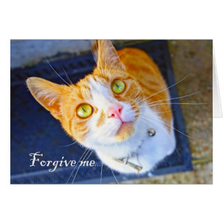 Forgive me, a lovely, cute cat with green eyes cards