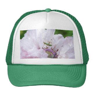 Fork Tailed Bush Katydid Nymph Trucker Hat