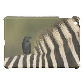 Fork-Tailed Drongo (Dicrurus adsimilis) riding iPad Mini Cover