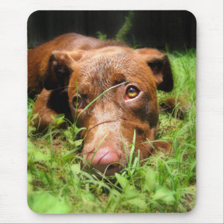 Forlorn Chocolate Lab Pit Puppy Mouse Pad