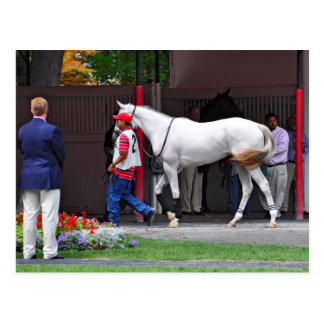 Form Fitting Filly by Tapit Postcard