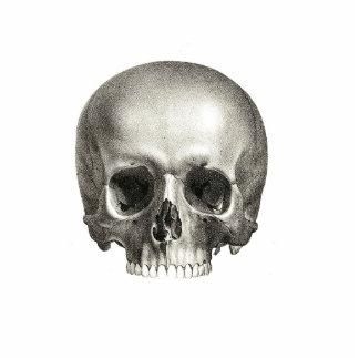 Forma del cráneo fotoescultura vertical