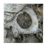 Forma redonda del extracto extraño del árbol azulejo cerámica