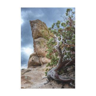Formación de roca, Mt. Lemmon Impresión En Lona